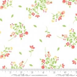 Sundrops - White Blossom