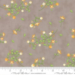Sundrops - Taupe Blossom