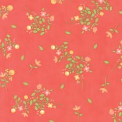 Sundrops - Dark Coral Blossom