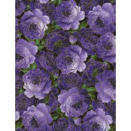 Enchanted - Packed Roses Purple