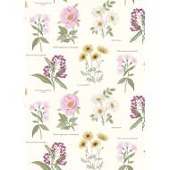 Botanic Garden - Botanic Flowers On Cream
