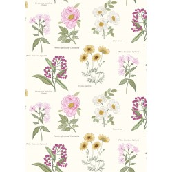 Botanic Garden - Botanic Flowers On Cream