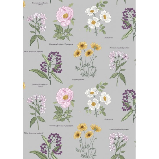 Botanic Garden - Botanic Flowers On Light Grey