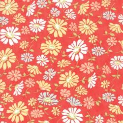 Catalina - Daisy Lollipop