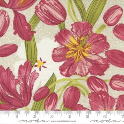 Tulip Tango - Tulips Cream - PRE-ORDER DUE MAY