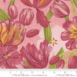 Tulip Tango - Tulips Princess - PRE-ORDER DUE MAY